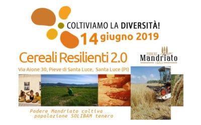 Coltiviamo la Diversità – Cereali Resilienti 2.0